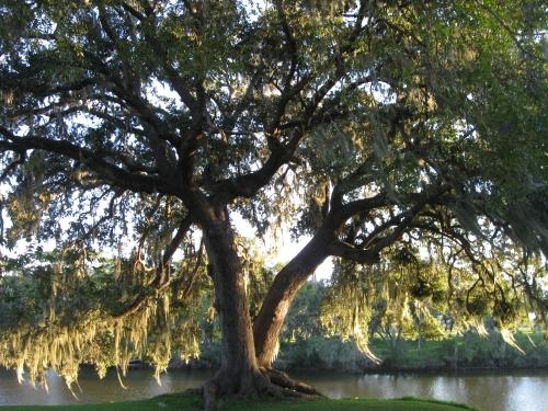11-1-2014 Twin Oaks - San Bernard River, Brazoria, TX -    Matheson